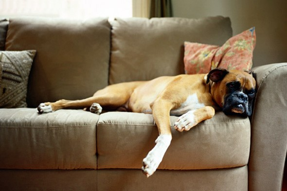 17 Tips for Keeping a Clean House with PETS