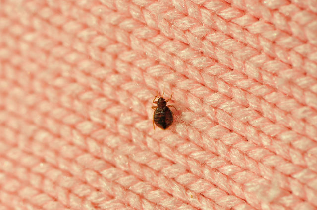 Do You Have Bed Bugs? Bed Bug Ellimination, Home Cleaning, Home Cleaning Tips and Tricks, How to Get Rid of Bedbugs, Easy Ways to Keep Your Home Fresh, Popular Pin