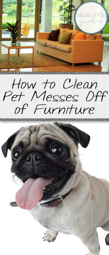 How to Clean Pet Messes Off of Furniture| Cleaning, How to Clean Pet Messes, Cleaning Tips and Tricks, Cleaning Hacks, Clean Pet Messes, Popular Pin #Cleaning #CleaningTIps