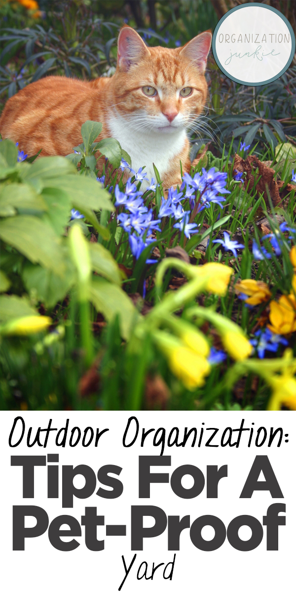 outdoor organization | pet-proof yard | tips for a pet-proof yard | yard | pet | pet owner | pet owner tips | tips and tricks