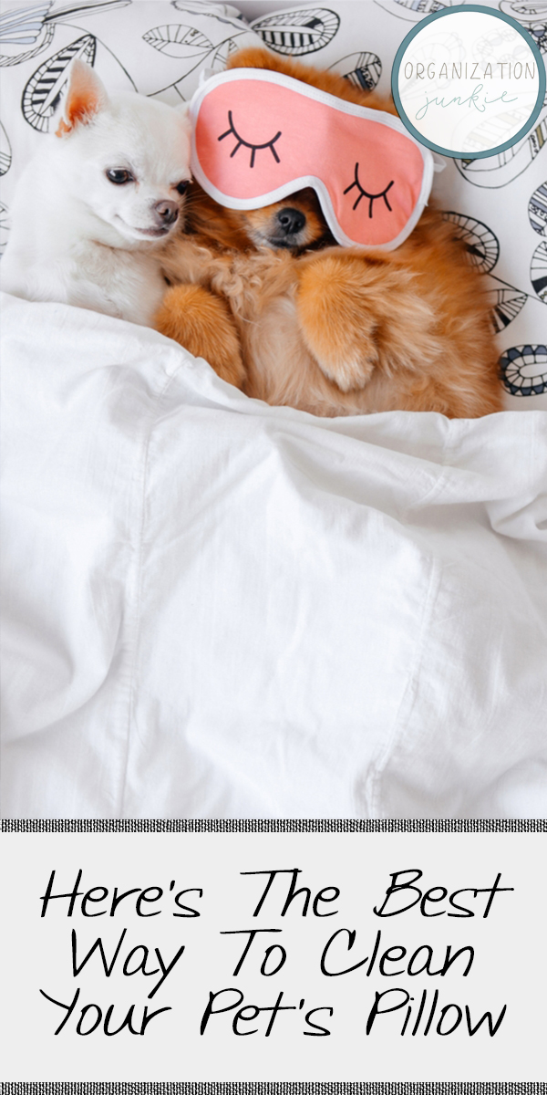 Clean Your Pet's Pillow | pets | clean | how to | cleanliness | how to clean your pet's pillow | pet owner | cleaning