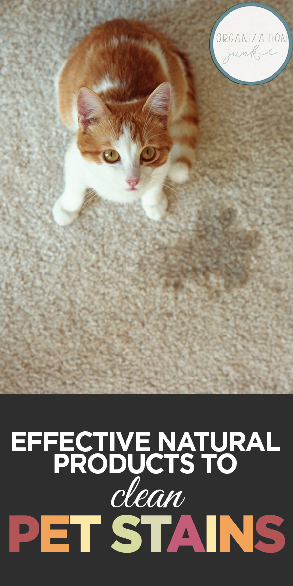 Natural Products to Clean Pet Stains | cleaning | natural products | pet stains | products to clean pet stains | tips and tricks