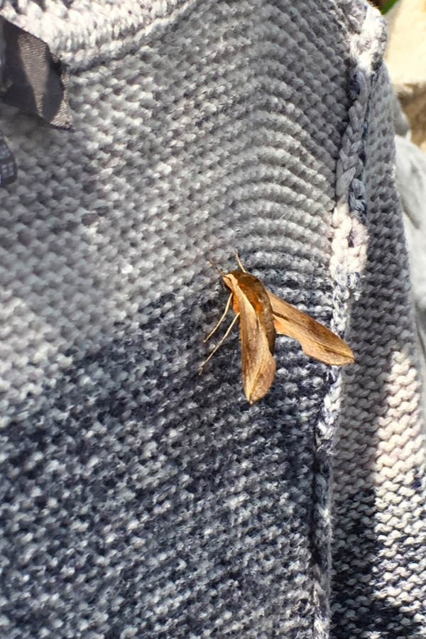 Keep Moths Out Of Your Closets