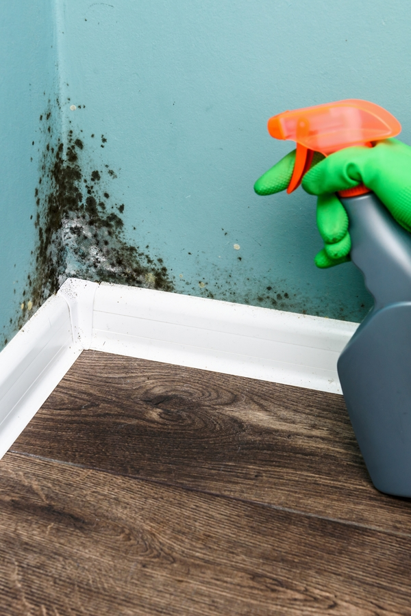 Mold is a sneaky home invader. You may have it growing in your home and not even realize it. But when you do discover it, how do you get rid of it? Today we have tips for cleaning mold on walls and so much more.