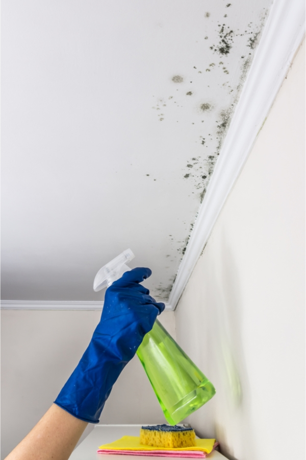 Mold is a sneaky home invader. You may have it growing in your home and not even realize it. But when you do discover it, how do you get rid of it? Today we have tips for cleaning mold on ceilings and so much more.