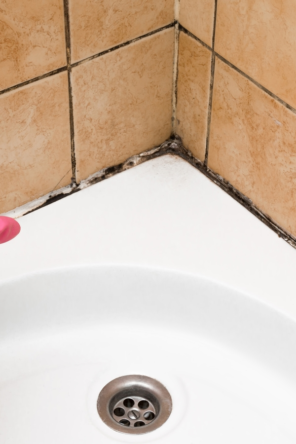 Mold is a sneaky home invader. You may have it growing in your home and not even realize it. But when you do discover it, how do you get rid of it? Today we have tips for cleaning mold in showers and so much more.