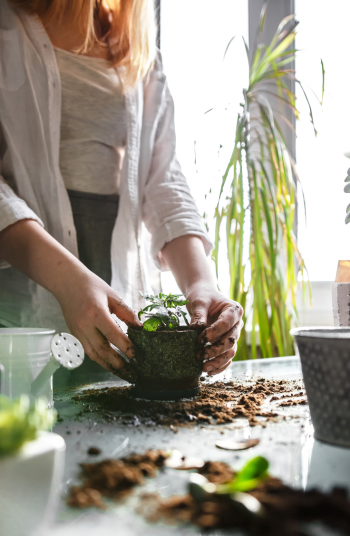 You may be wondering how to create a hobby space in your home? It can be tricky! I'll help you gather all the necessities so you can garden in your space!